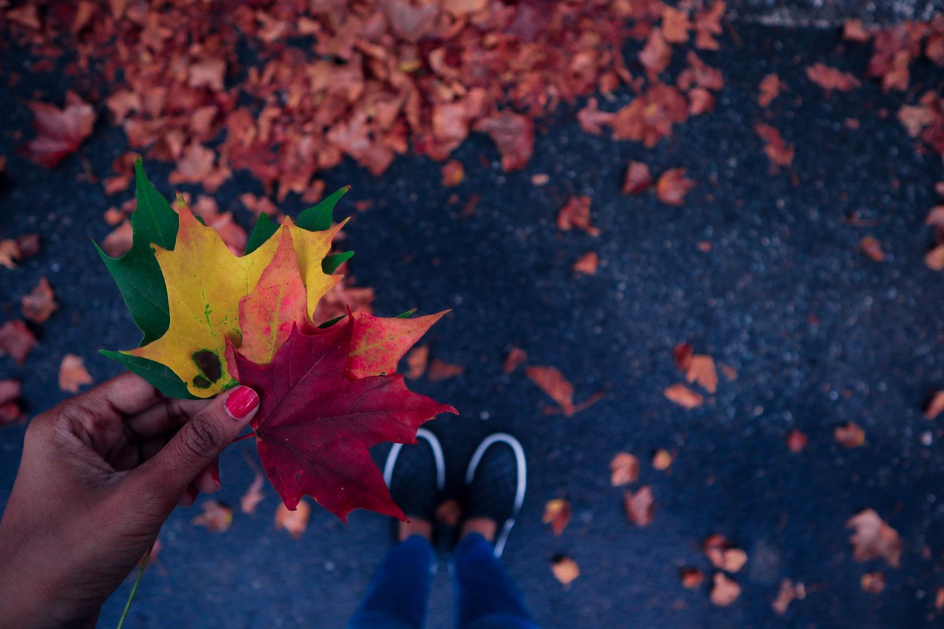 autumn-leaves-fall